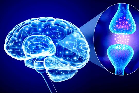 Яка роль нейромедіаторів